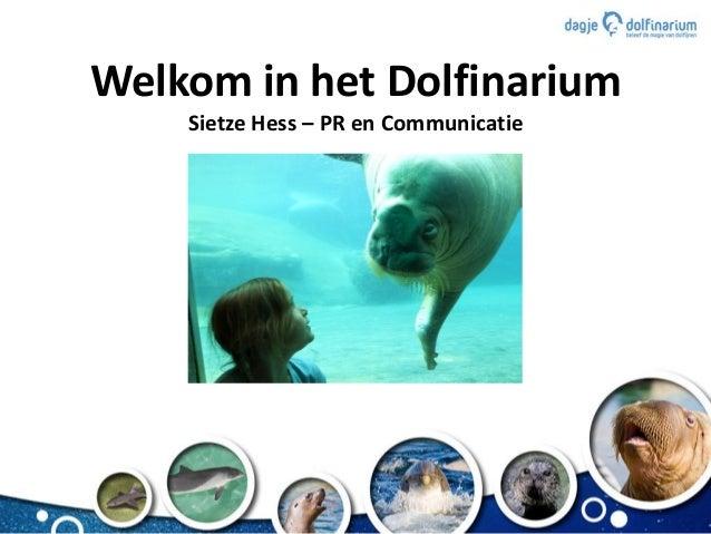 Welkom in het Dolfinarium Sietze Hess – PR en Communicatie