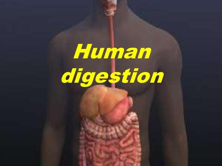 Human digestion<br />