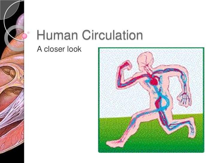 Human Circulation<br />A closer look<br />