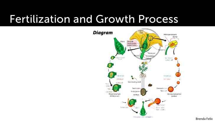 plant growth development rh slideshare net plant growth regulators diagram Science Fair Plant Growth Chart