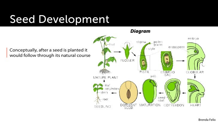 plant growth development rh slideshare net Plant Growth Data Chart Science Fair Plant Growth Chart