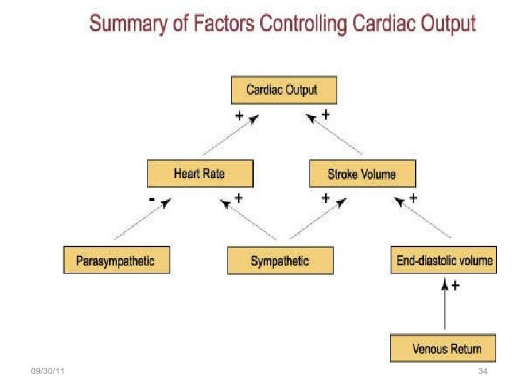 regulation of cardiac out put