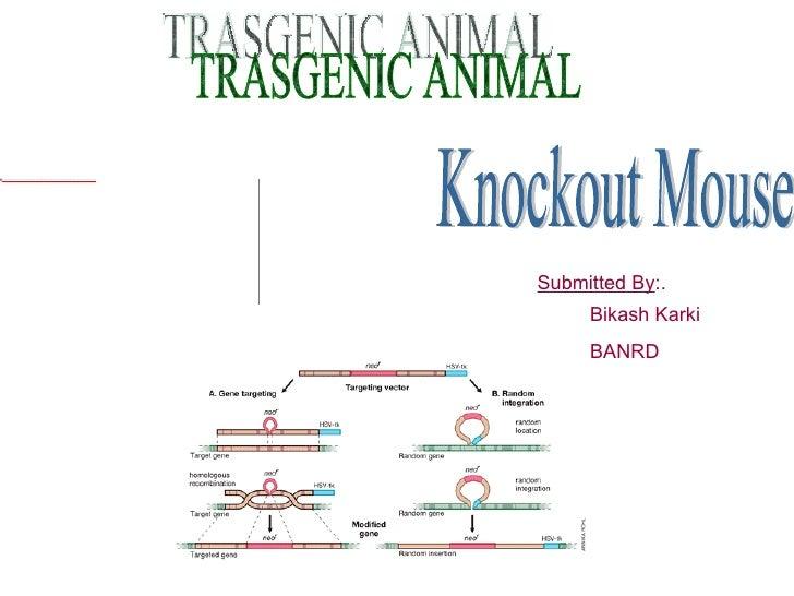 KnockOut mouse technology By Bikash karki
