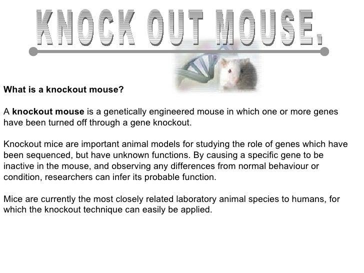 knockout mouse presentation Pkcγ knockout mouse lenses are more susceptible to oxidative stress damage ss lobell, d lin, lloyd willard, m barnett, e gustafson, d madgwick, dj takemoto.