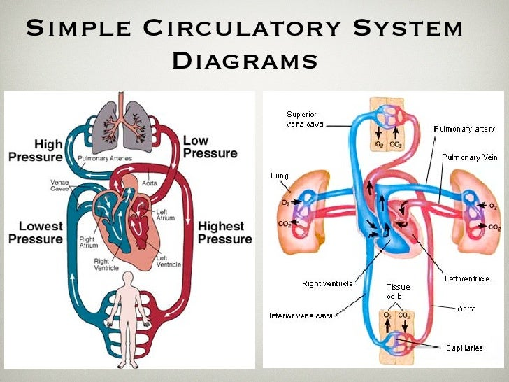 Hemodynamics And Shock