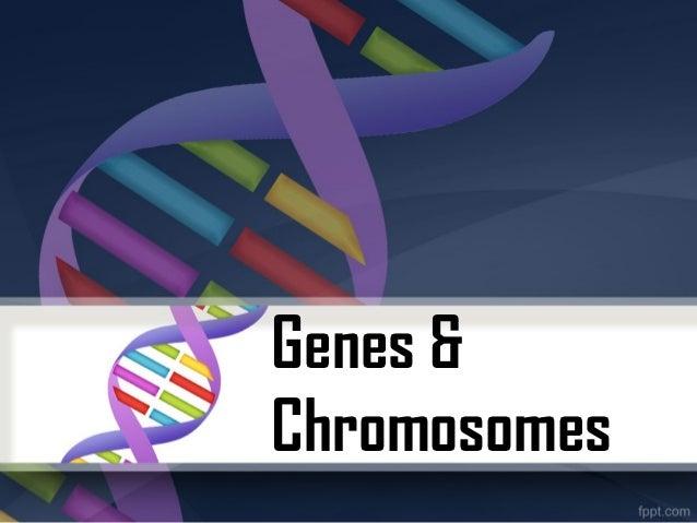 Genes &Chromosomes