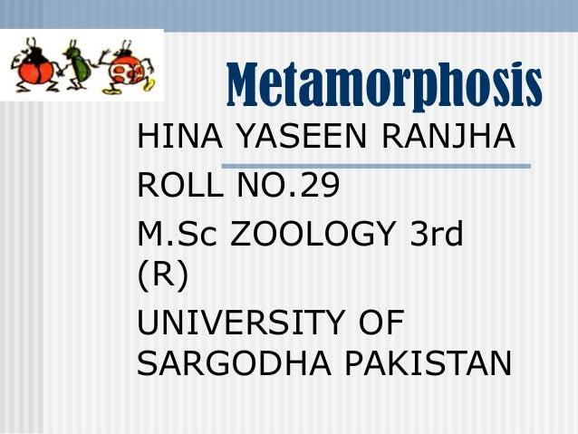 Metamorphosis  HINA YASEEN RANJHA ROLL NO.29 M.Sc ZOOLOGY 3rd (R) UNIVERSITY OF SARGODHA PAKISTAN