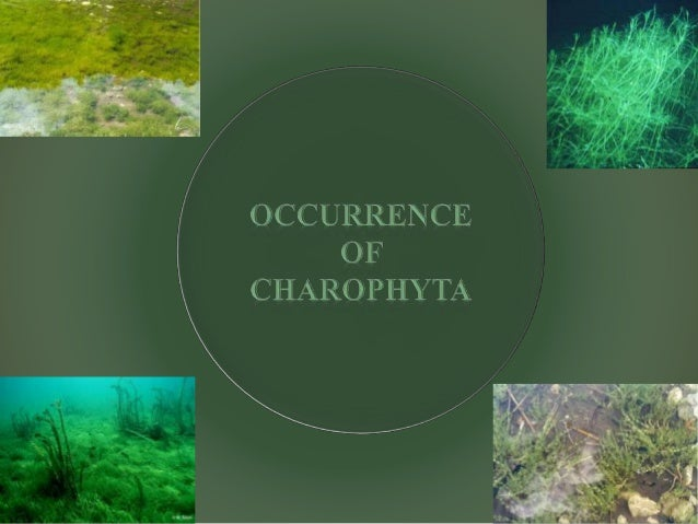 Charophyta asexual reproduction examples