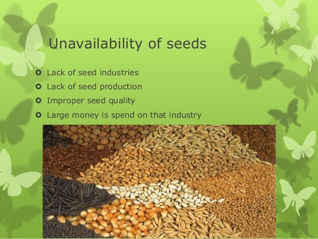 hyv seeds High yielding variety (hyv) seeds are those which produce large quantities of crops especially wheat and rice the use of these seeds requires regular supply of water and optimum use of fertiliser and pesticide in correc.