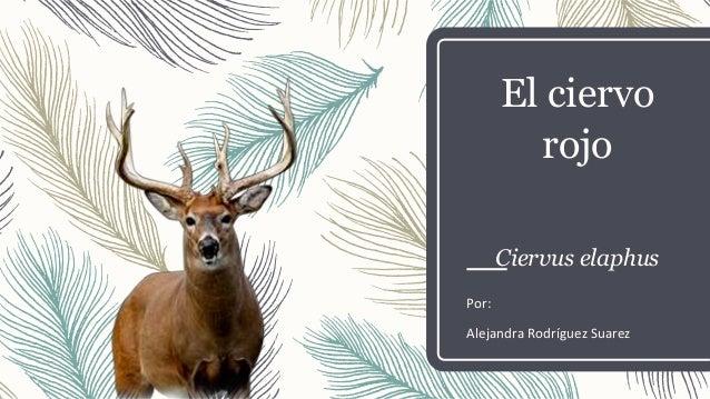 El ciervo rojo o colorado (Ciervus Elaphus)