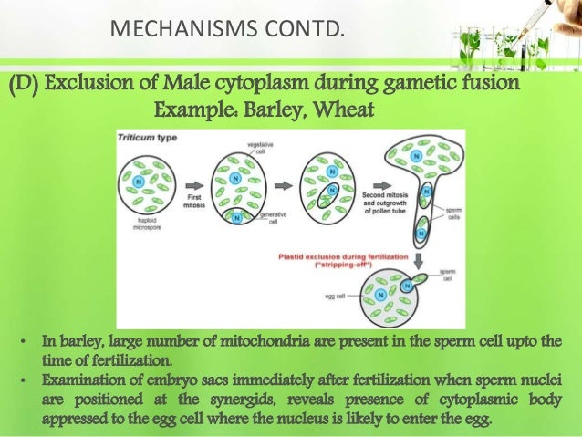 MECHANISMS CONTD. (D) Exclusion of Male cytoplasm during gametic fusion Example: Barley, Wheat • In barley, large number o...