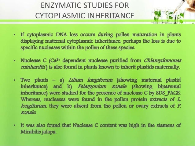 ENZYMATIC STUDIES FOR CYTOPLASMIC INHERITANCE • If cytoplasmic DNA loss occurs during pollen maturation in plants displayi...