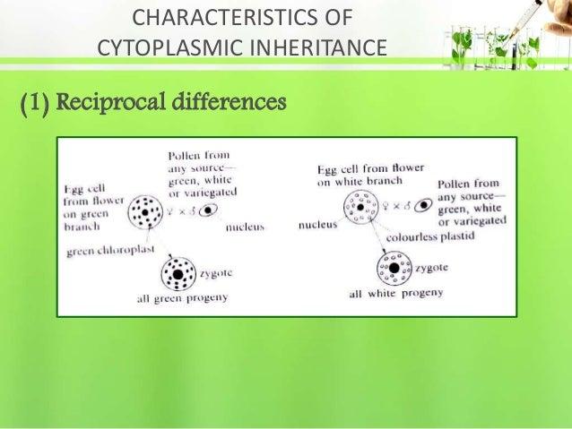 CHARACTERISTICS OF CYTOPLASMIC INHERITANCE (1) Reciprocal differences