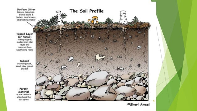 Soil profile for 4 parts of soil