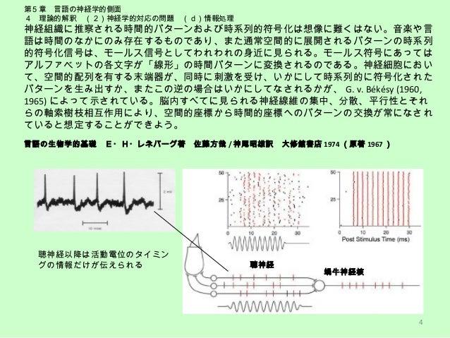誘発電位および認知関連電位による聴覚認知の発達 音声言語学会 2010