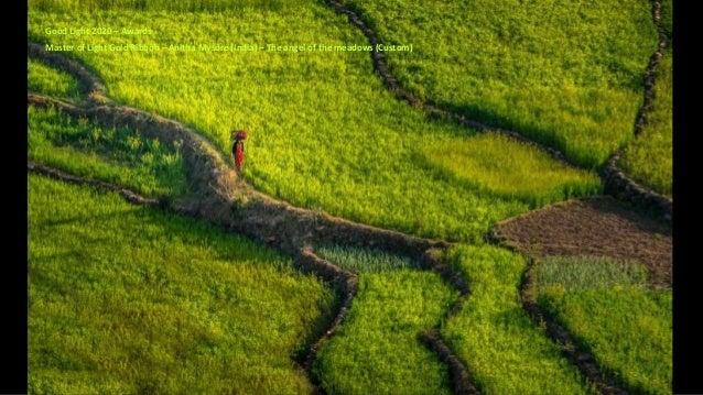 Master of Light Gold Ribbon – Anitha Mysore (India) – The angel of the meadows (Custom) Good Light 2020 – Awards