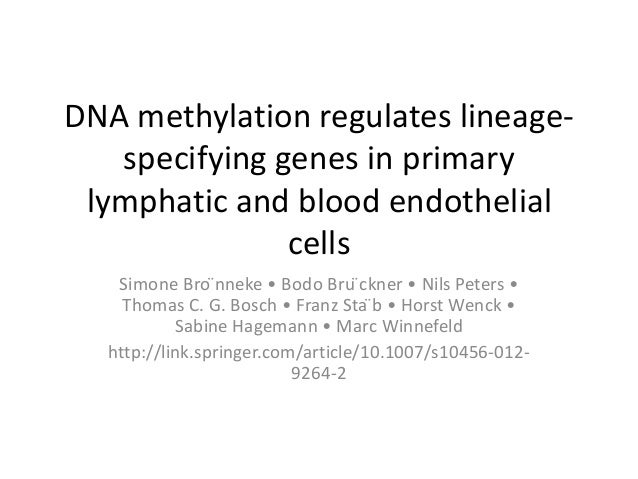 DNA methylation regulates lineage- specifying genes in primary lymphatic and blood endothelial cells Simone Bro ̈nneke • B...