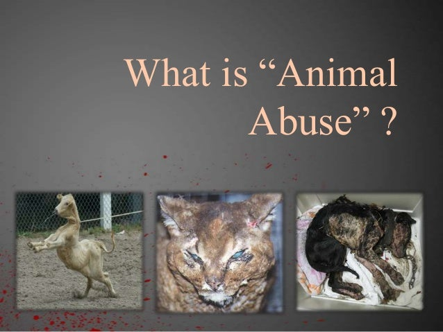 animal cruelty oral presentation This involves a brief summary and a question for the class to initiate discussion student leadership on these presentations will be considered part of the grade along with the course paper students will conduct at least one in-class oral argument from either the prosecution or defense perspective in an animal cruelty case.