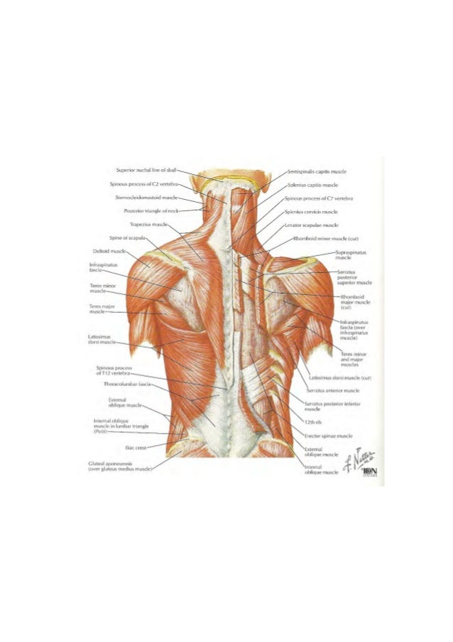Examination and Treatment of the Thoracic Spine and Ribs