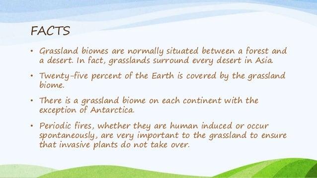 Grasslands Types And Vegetation