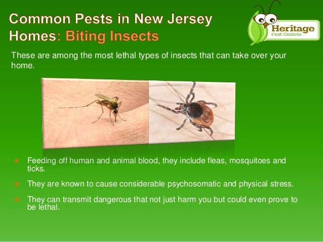 Common Type of Pests in New Jersey Homes by Heritage Pest ...