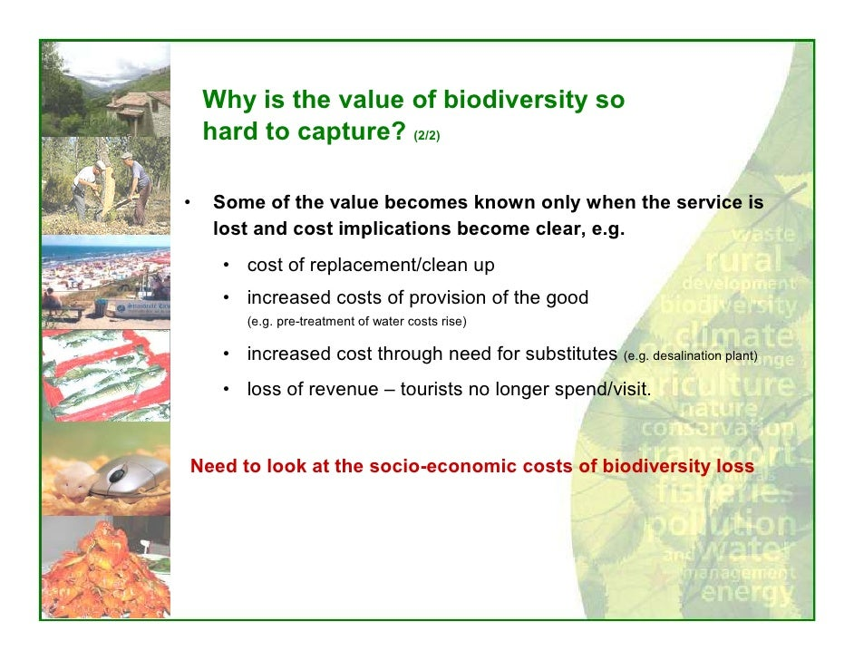 the loss of biodiversity and heritage It includes people - homo sapiens - and it is a global natural heritage of immeasurable value land degradation and the loss of biodiversity resources (the loss of natural capital) is occurring across south africa.