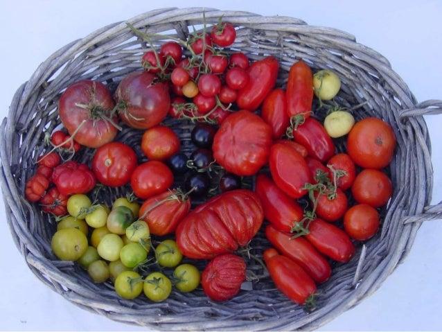 PLANT SMART have your best growing season ever… even in Evergreen! Margaret Rode, Evergreen Community Gardener