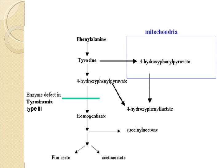 inborn metabolic disease tyrosinemia essay Tyrosinemia type 2, richner-hanhart syndrome, oculocutaneous tyrosinemia  tyrosinemia  tyrosinemia type i is an inborn error of metabolism due to  deficiency of fumarilacetoacetase  condition summary: hereditary tyrosinemia , type i.