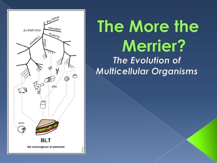 The More the Merrier?<br />The Evolution of Multicellular Organisms<br />