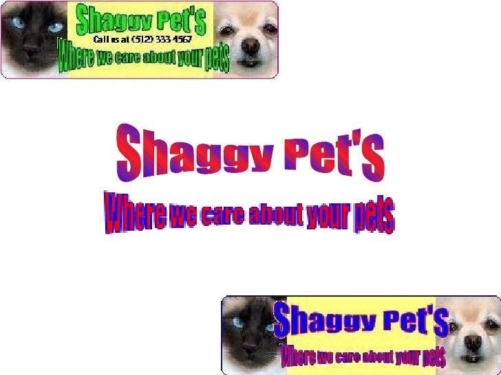 Shaggy Pet's
