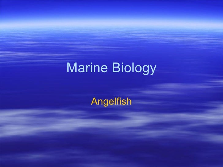 Marine Biology     Angelfish