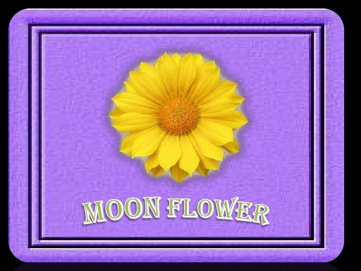 MoonFlower<br />