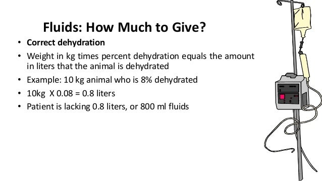How Much Iv Fluid To Give A Dog Fpr Dehydration