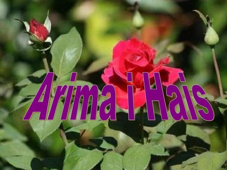 Arima i Hais