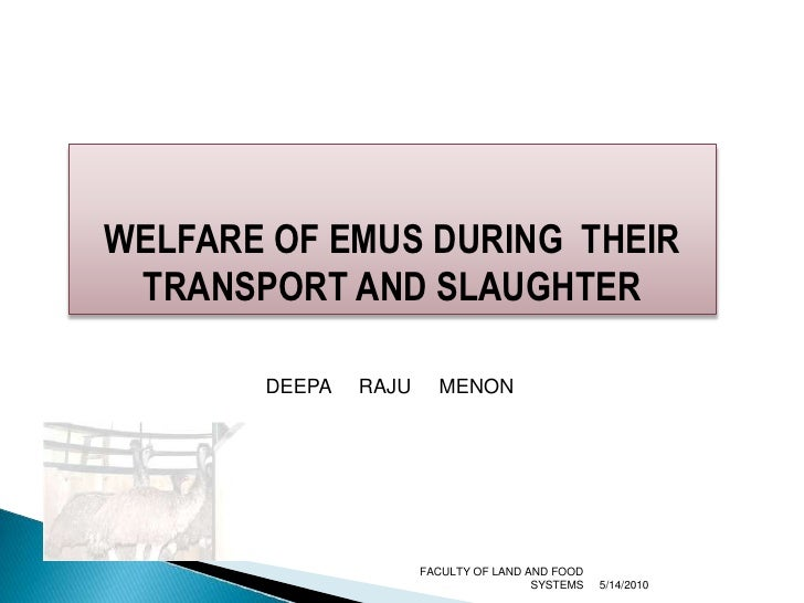 WELFARE OF EMUS DURING  THEIR TRANSPORT AND SLAUGHTER<br />5/9/2010<br />FACULTY OF LAND AND FOOD SYSTEMS<br />DEEPA     R...