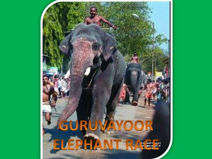 GURUVAYOOR<br />ELEPHANT RACE<br />