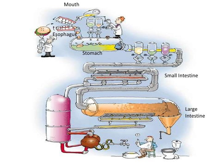 Digestive system flow chart publicscrutiny Image collections