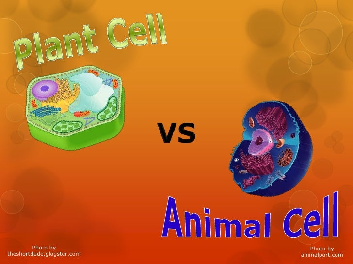 Plant Cell<br />VS<br />AnimalCell<br />Photo by<br />theshortdude.glogster.com<br />Photo by <br />animalport.com<br />