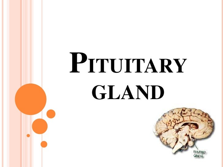 PITUITARY GLAND<br />