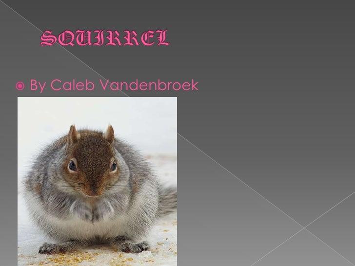 SQUIRREL<br />By Caleb Vandenbroek<br />