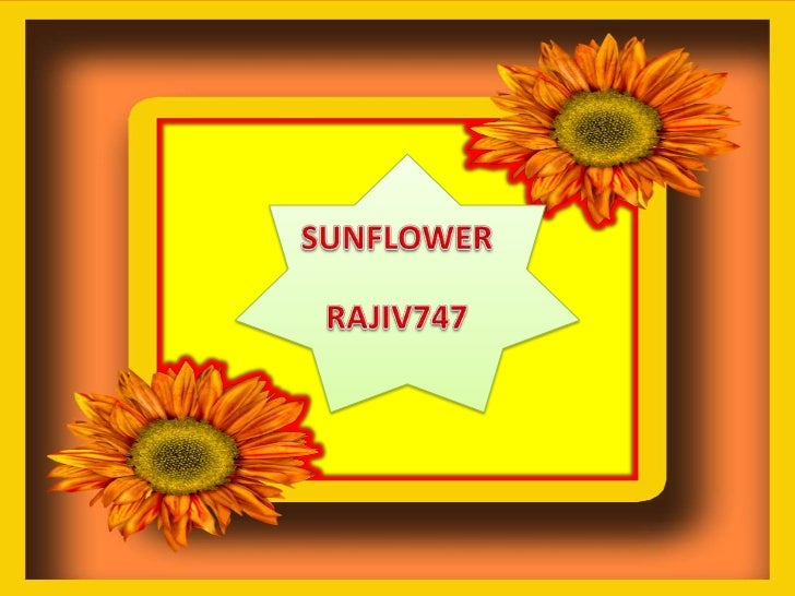 SUNFLOWER<br />RAJIV747<br />