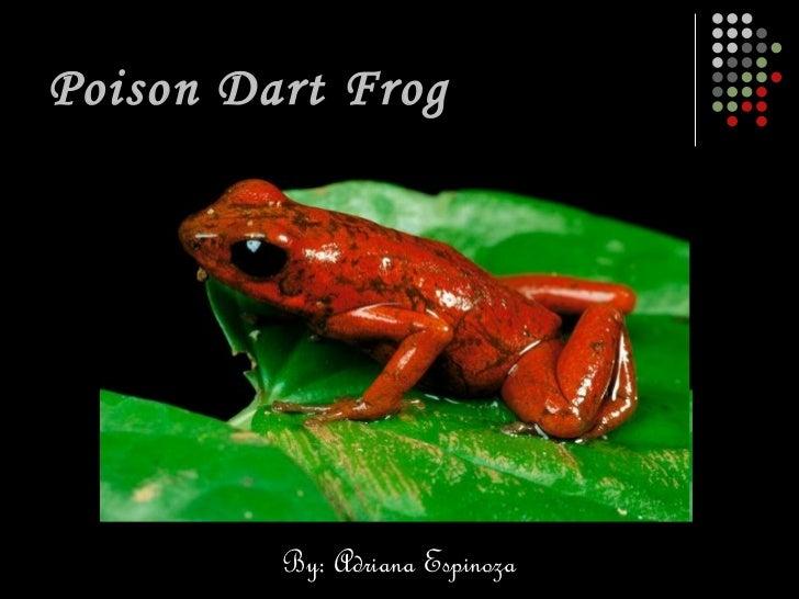 Poison Dart Frog By: Adriana Espinoza