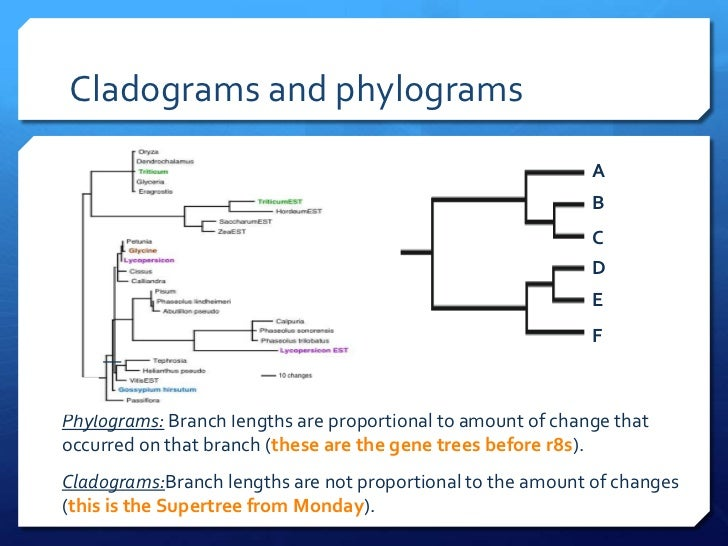 how to read a cladogram ppt