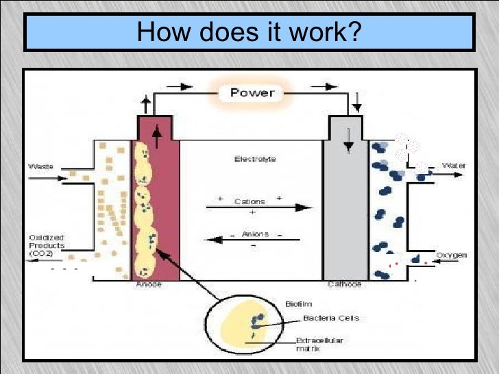 benefits of microbial fuel cell Waste-wood derived biochar was evaluated for the first time as both an anode and cathode material, simultaneously, in an overflow style microbial fuel cell (mfc) using actual industrial wastewater.