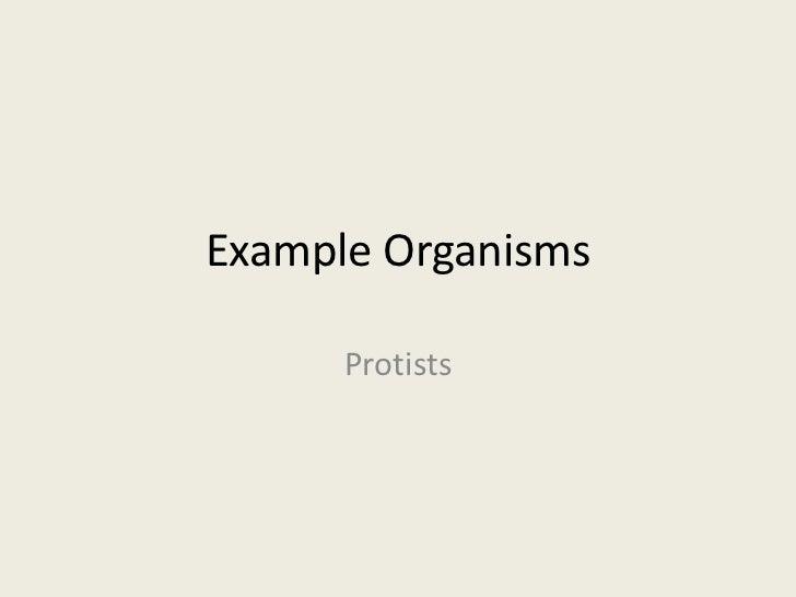 Example Organisms      Protists
