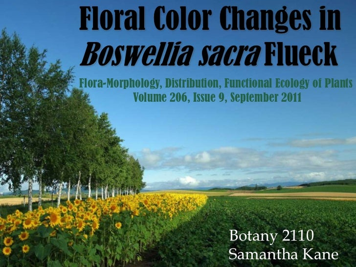 Floral Color Changes inBoswellia sacra FlueckFlora-Morphology, Distribution, Functional Ecology of Plants           Volume...