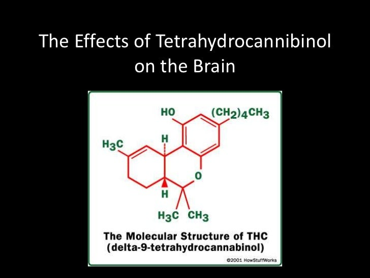 The Effects of Tetrahydrocannibinol            on the Brain