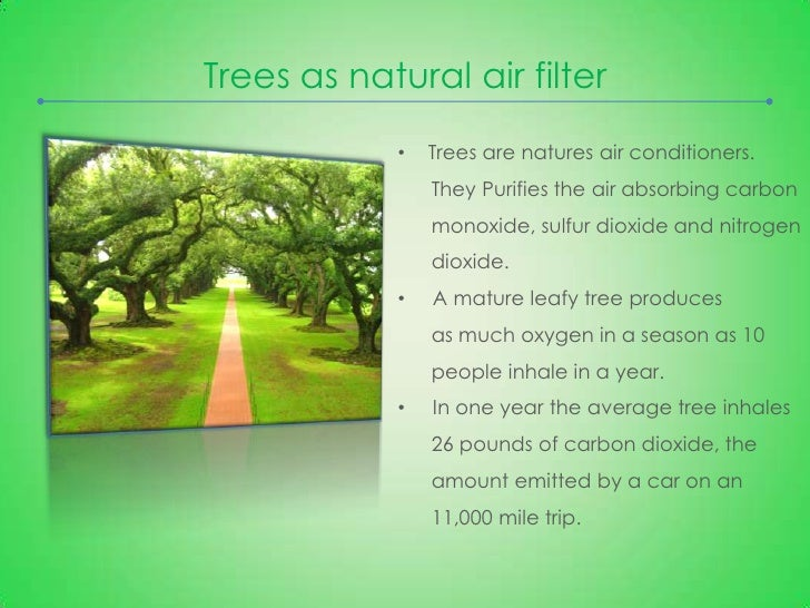 importance of trees trees