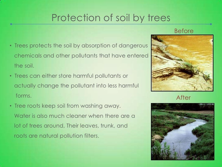 importance of trees 5