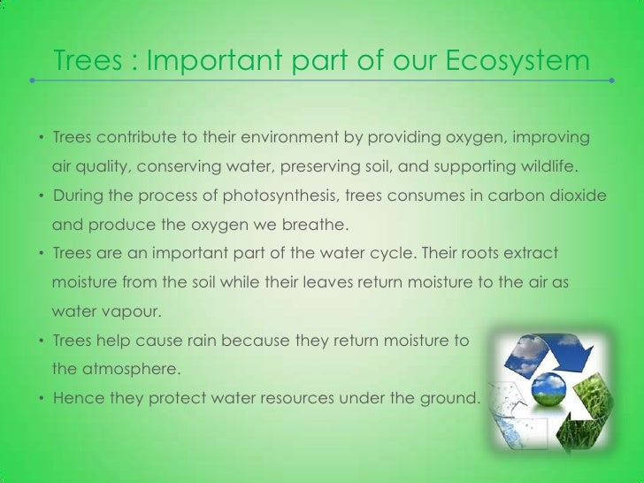 save the environment essay co save the environment essay importance of trees